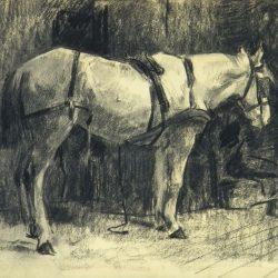 279 Een paard in de stal